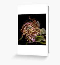 Rosehip with a twirl! Greeting Card