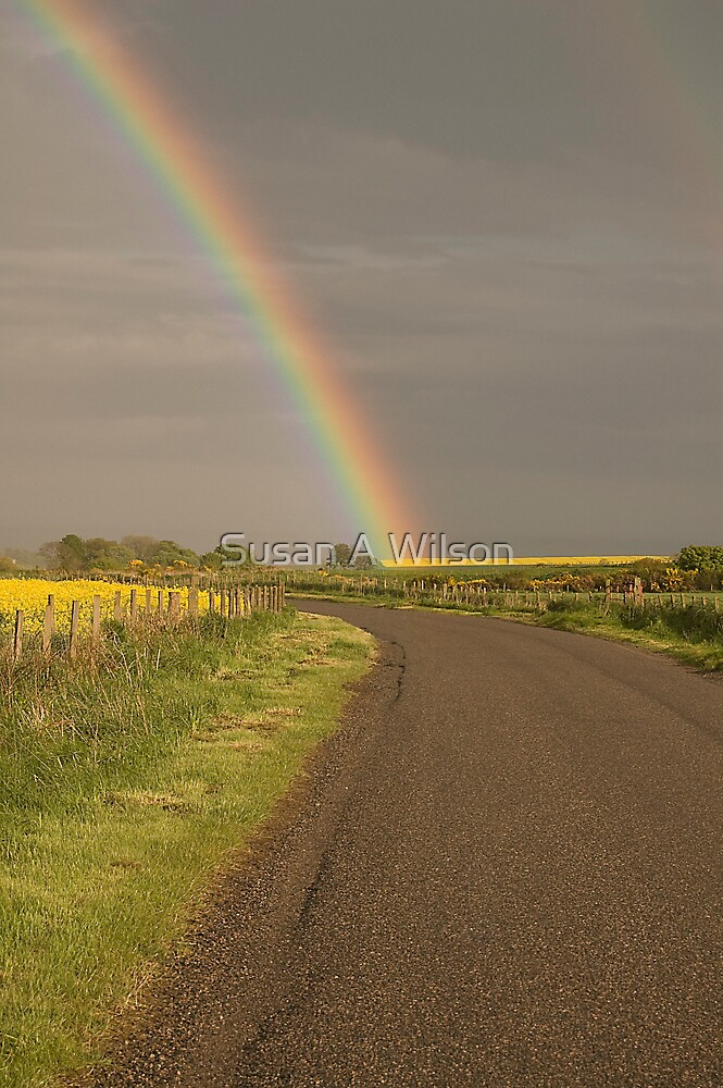 Field of Gold by Susan A Wilson