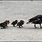""""""" OK Girls we can cross now"""" by Malcolm Chant"""