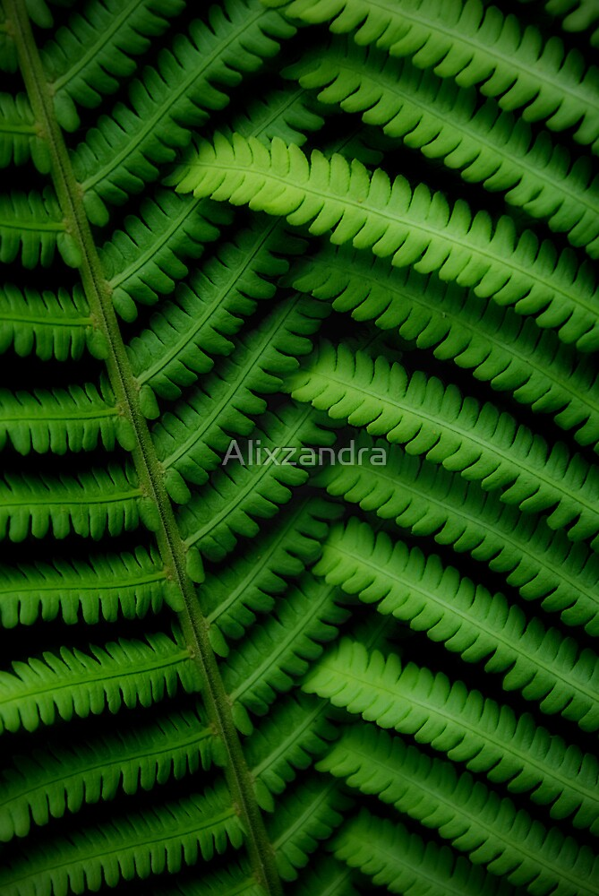 Fernly Linked - Natures Natural Canvas by Alixzandra