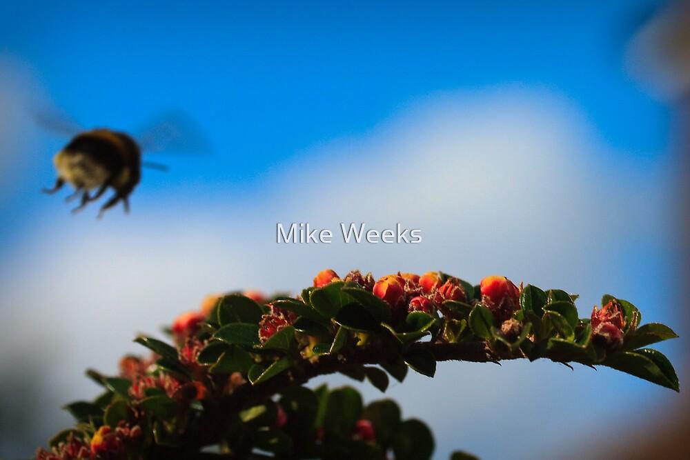 Gear Down - Landing Pad in Sight by Mike Weeks