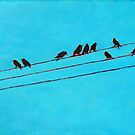 Birds, Wires 14 by eolai