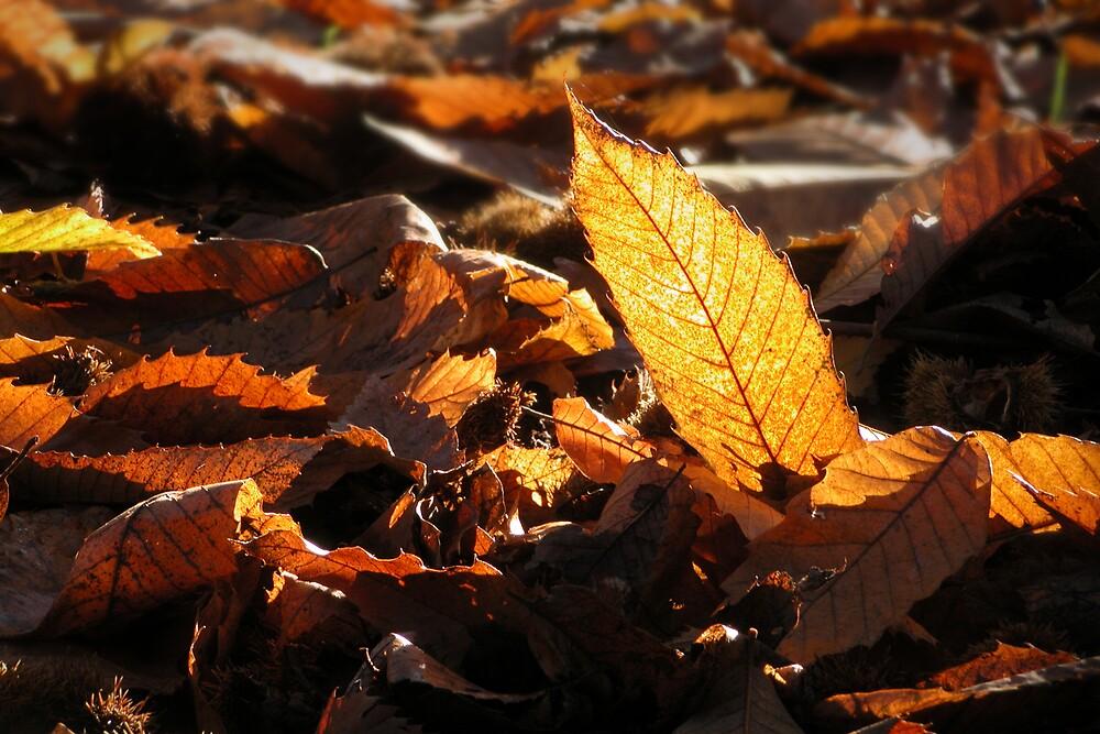 Autumn Debris by Geoff Spivey
