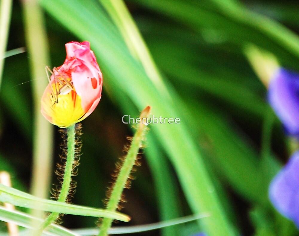 Grasshopper Hideaway: by Cherubtree