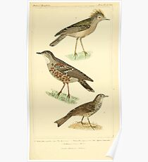 The Animal Kingdom by Georges Cuvier, PA Latreille, and Henry McMurtrie 1834 696 - Aves Avians Birds Poster