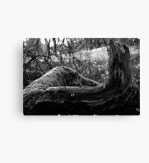 Curving Tree Trunk, Waterlow Park, London Canvas Print