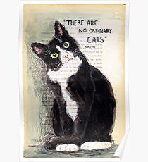 CITATION CAT - COLETTE 2 Poster
