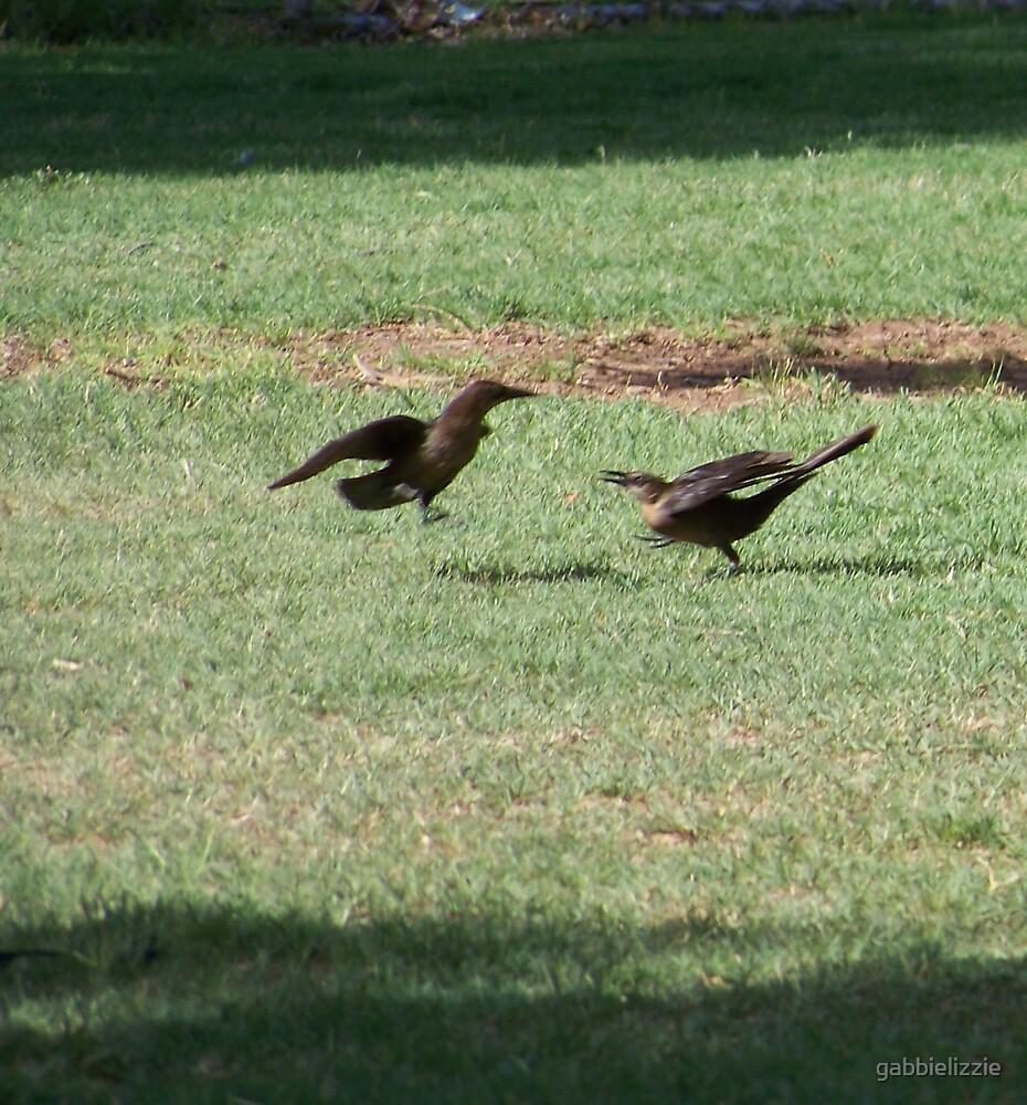 courting grackles by gabbielizzie