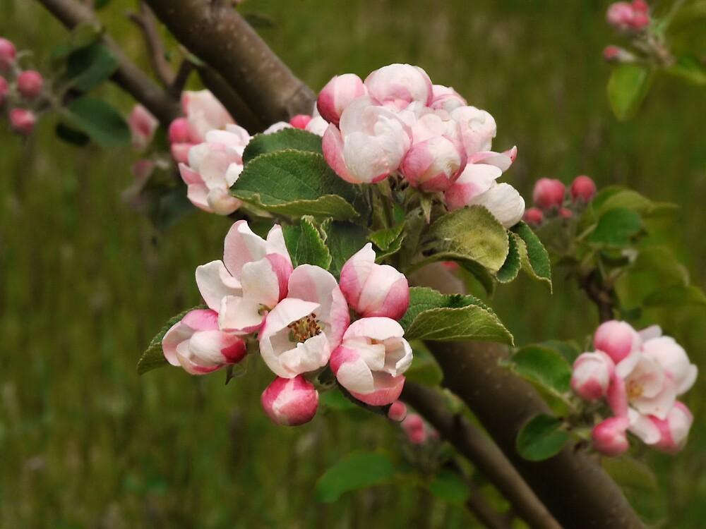 Spring Freedom by VickiOBrien