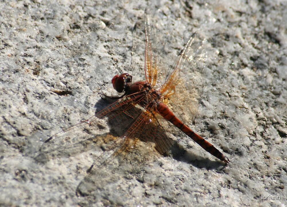 dragonfly by loriann