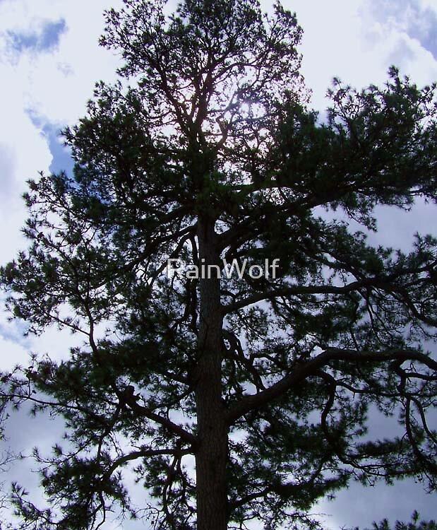 Great Pine by RainWolf