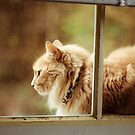Tanha in the Window by Steven Newton
