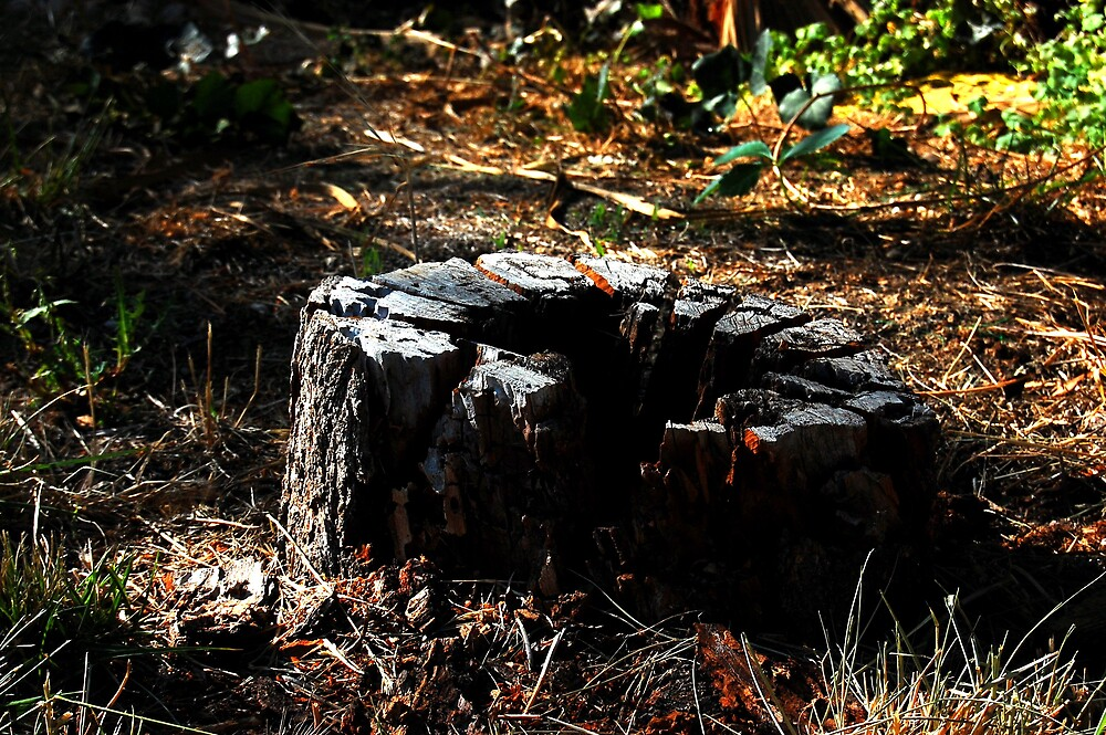 Dead Stump by Justin Emery