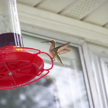 Hummingbird by RainWolf