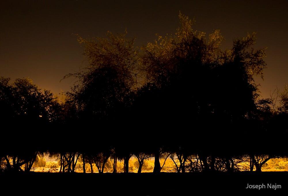 Trees at Night by Joseph Najm