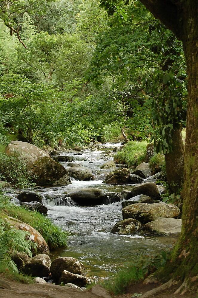 Ireland Stream by kayf