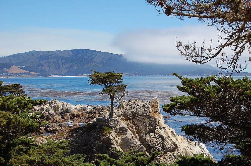 Lone Cypress by kayf