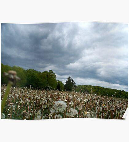 Fields of Dandelions / Dramatic  Sky  Poster
