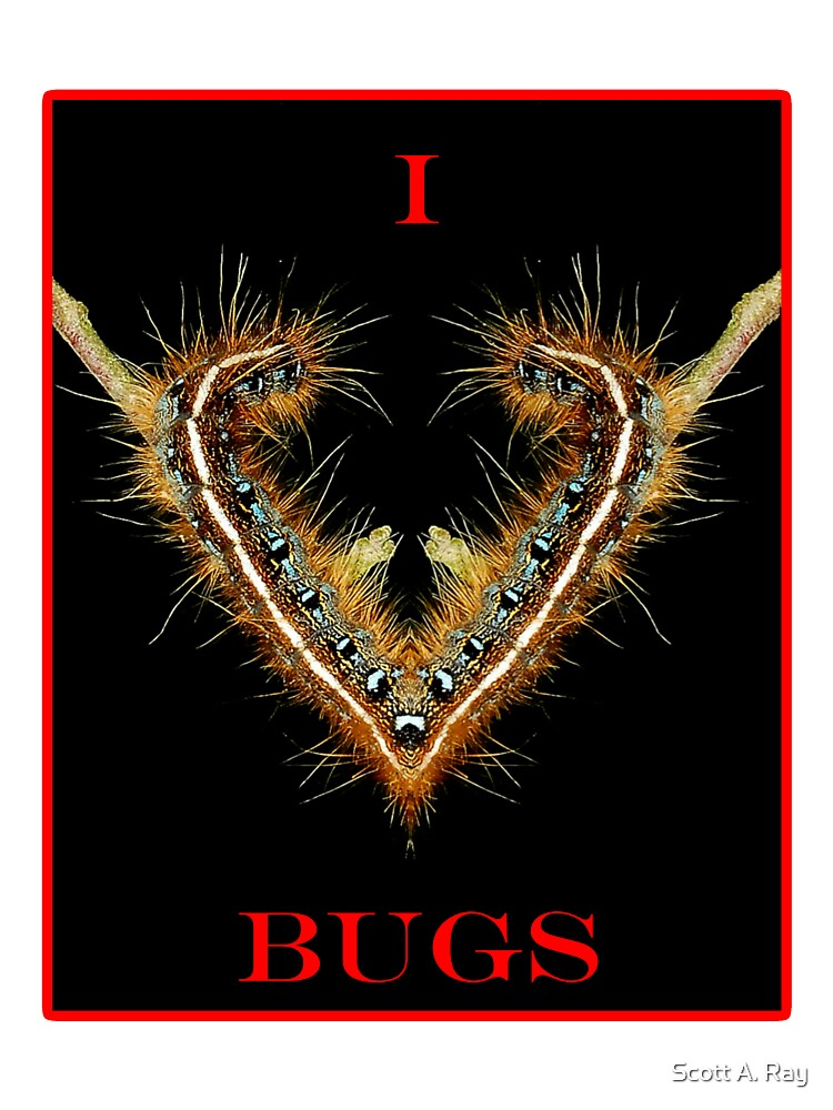 I love bugs by Scott A. Ray