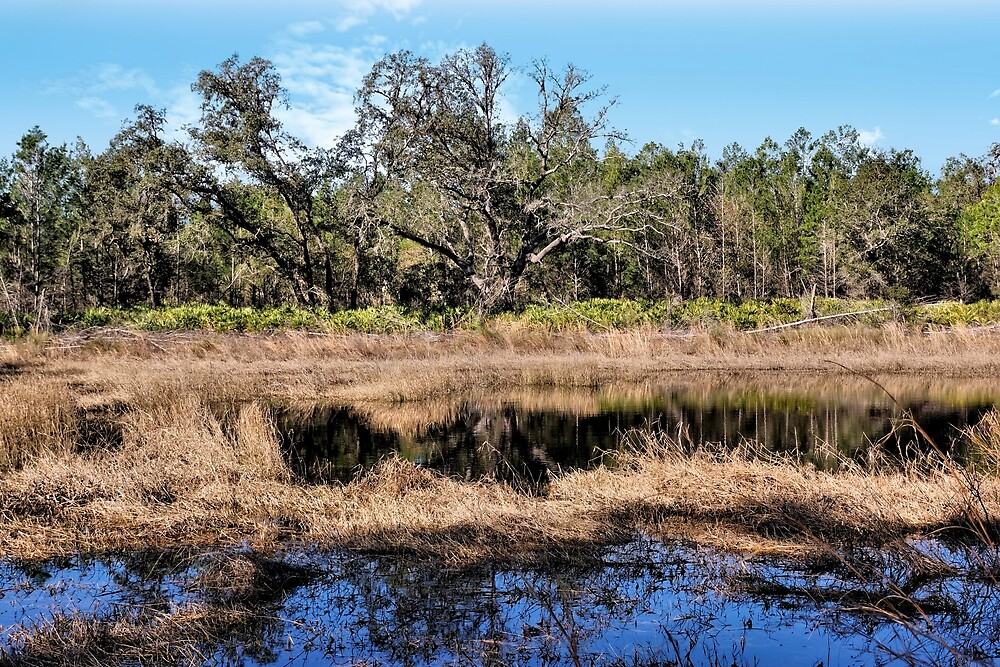 Woods And Wetlands 1 - Florida by jtrommer
