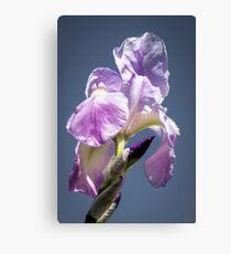 A Sky Full of Iris Canvas Print
