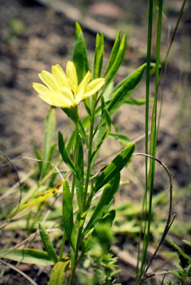 Yellow Mellow by Danielle Foreman