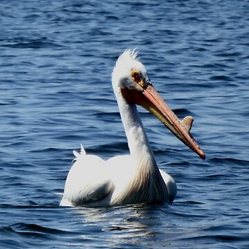 Beautiful Pelican by NicoleK-design