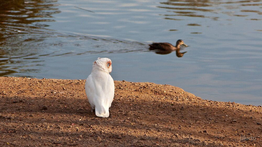 Bird Watching by Blurto