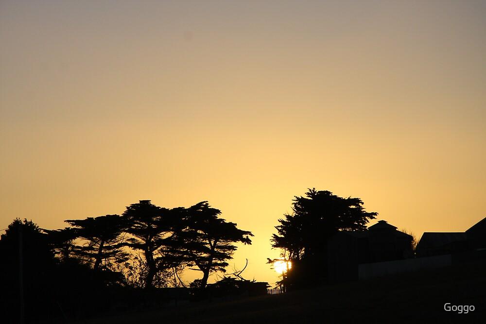 Tangerine dream by Goggo