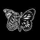 Butterfly I by SJ-Graphics