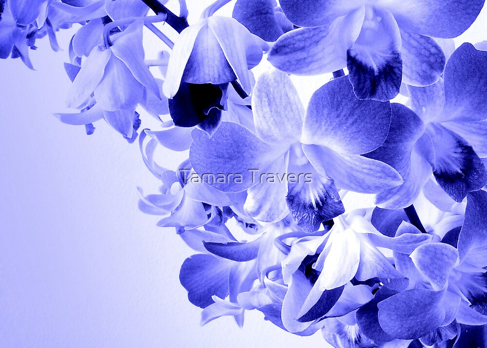 Orchid blues... by Tamara Travers