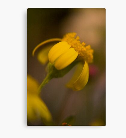 Yellow (from wild flowers collection) Canvas Print
