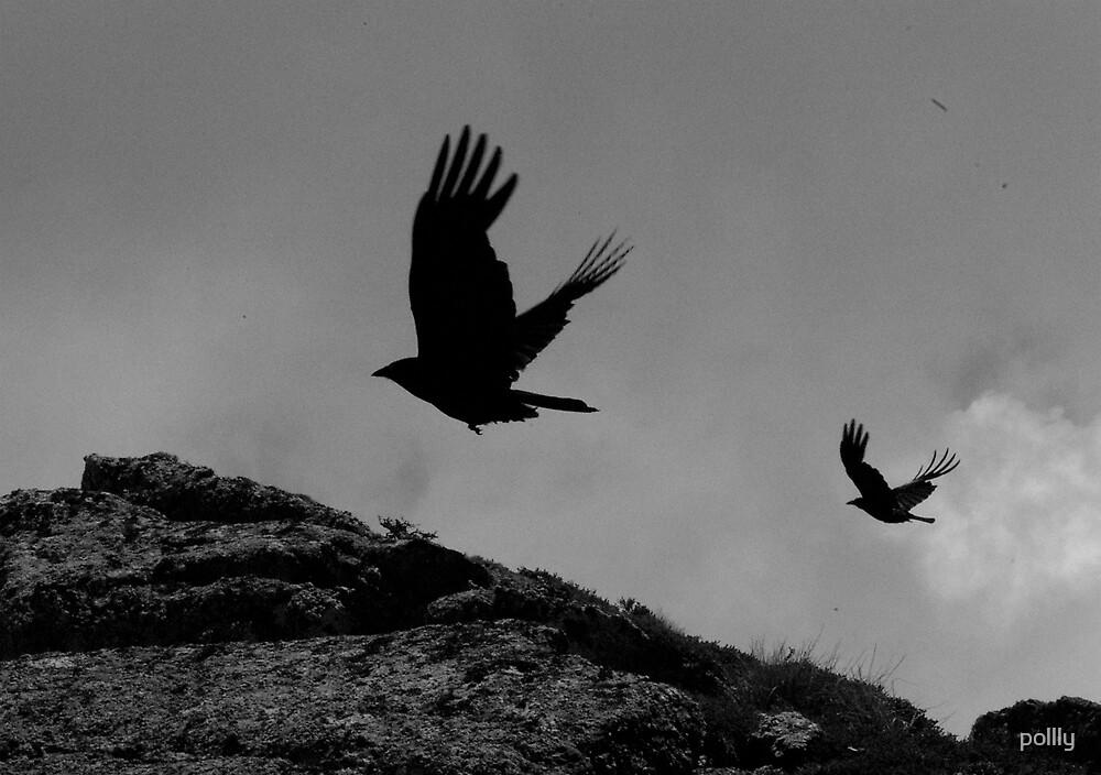 Ravens by pollly