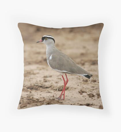 Crowned Lapwing Throw Pillow