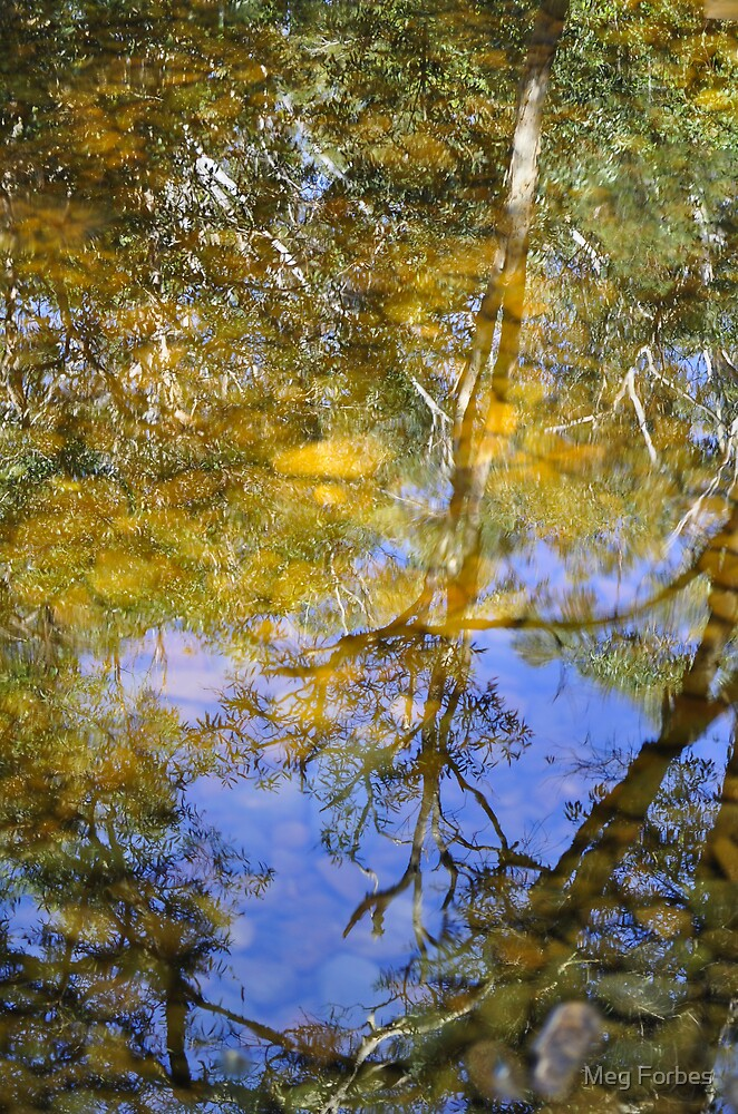 Eucalypt reflections by Meg Forbes
