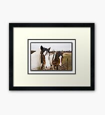 Horses on a dull day. Framed Print