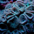 Coral by pollly