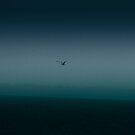 Lonely Bird by Rukshan Fernando