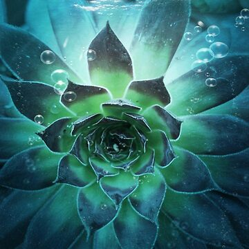 Water Succulent by ArtistKAO