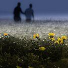 Beauitful Weeds by Rukshan Fernando