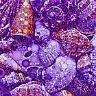 Seashells Abstract in Violet by Dana Roper