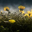 Weed Flowers by Rukshan Fernando