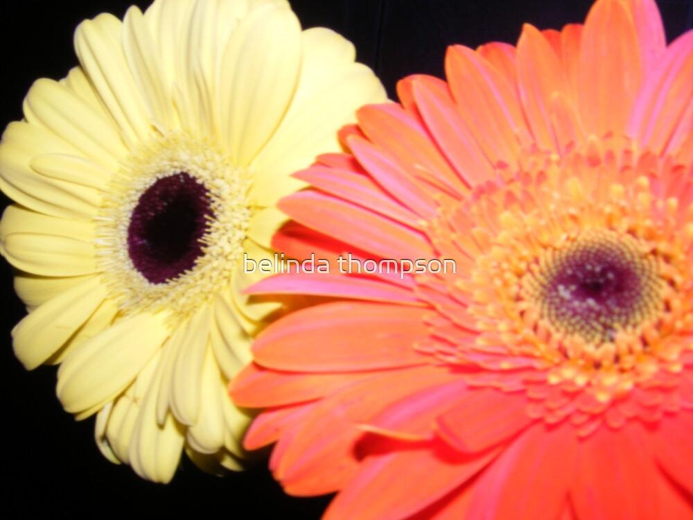 flowers by belinda thompson