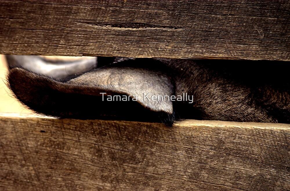 Pig's Ear by Tamara  Kenneally