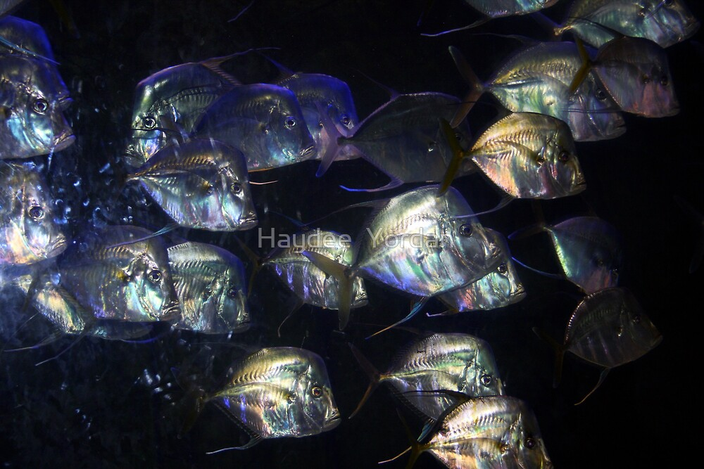 Sea Jacks reflections by Haydee  Yordan