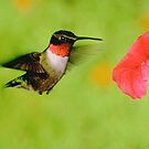 Ruby Throated Humming Bird & Petunia by Epeaches