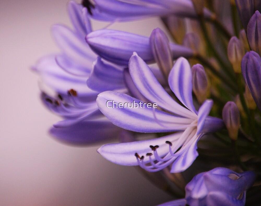 Amethyst Light: by Cherubtree