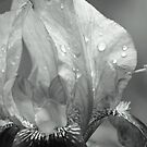 Flower Droplet in Black and White by Valeria Lee