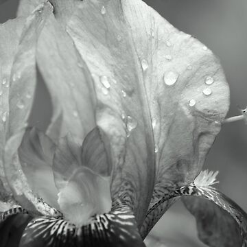 Flower Droplet in Black and White by vally30