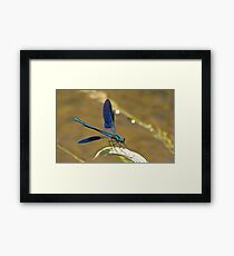 Deep Blue Wings Framed Print